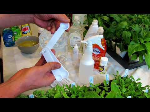 How to Use Peppermint & Rosemary Oil in the Garden: Recipes, Insects & How it Works DIY Ep-5