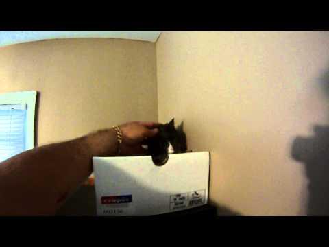 Mz Tia Rivera in her box