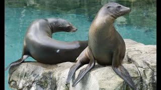 Download #South Korea#Amazing Sea lion...J3 Video