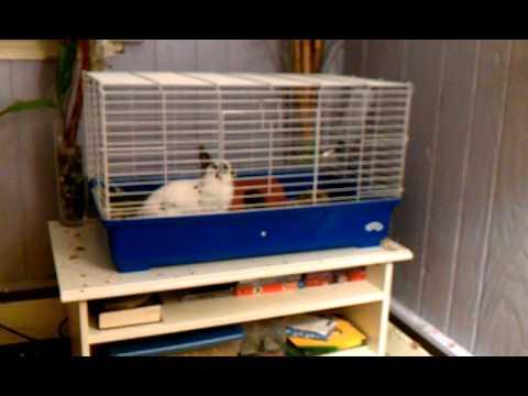 Caught my bunny run laps around her cage