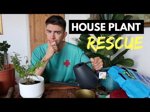 HOUSE PLANT RESCUE | HOW TO REVIVE DYING HOUSE PLANTS!