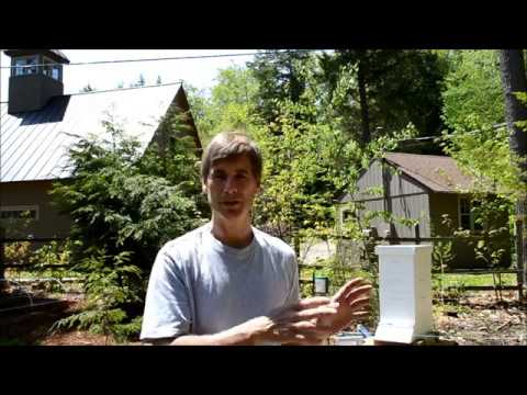 Installing Electric Bear Fence for Beehive
