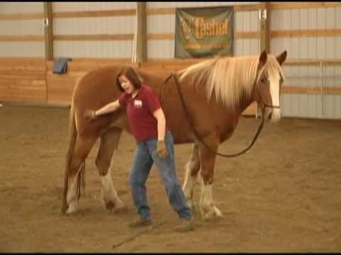 Five Fundamentals of Horse Training Part 1 of 2 with Gentle Horse Trainer Missy Wryn