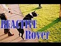 Reactive Rover- How to eliminate embarrassing behaviour
