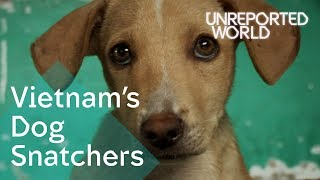 Stealing pet dogs for meat in Vietnam | Unreported World