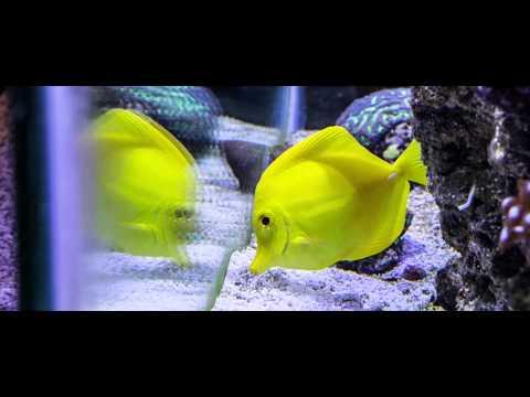 6D Magic Lantern Raw Fish