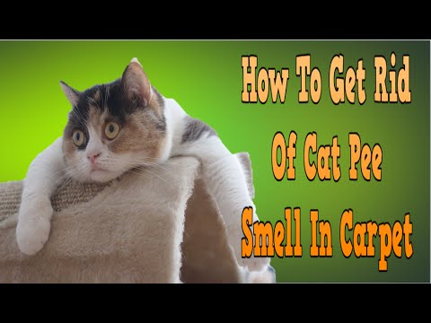 How To Get Rid Of Cat Pee Smell In Carpet, How To Get Rid Of Cat Smell, Clean Cat Urine