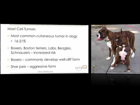 Mast Cell Tumors - The Most Common Skin Tumor in Dogs