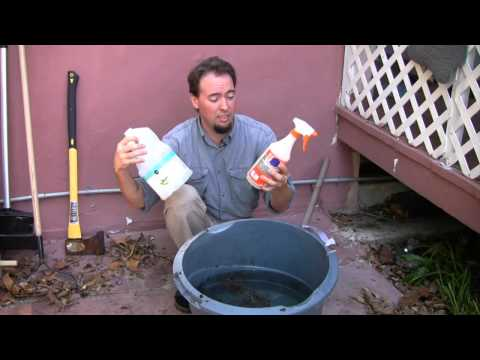 How to Kill Mosquitoes in Rain Barrels