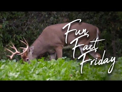 Fun Fact Friday: 5-year-old Henry Helps Track a Buck!!