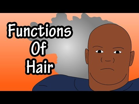 Functions Of Hair - The Purpose Of Hair - Why Do We Have Hair