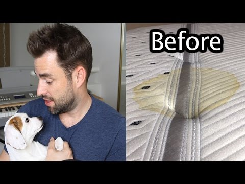 Removing PEE from my bed - Doggy Diaries