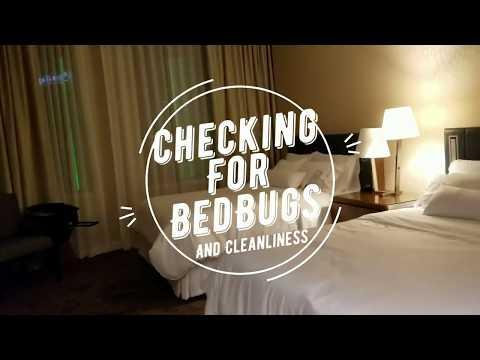 Checking For Bedbugs