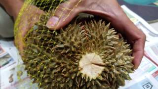 How to open Durian without cutting