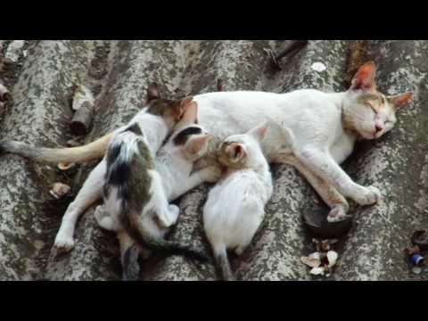 Xxx Mp4 Queen Cat Breast Feeding To Her Cute Kittens 3gp Sex