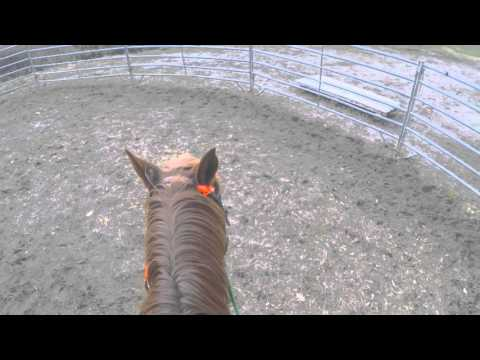 Horse with possible Lyme disease