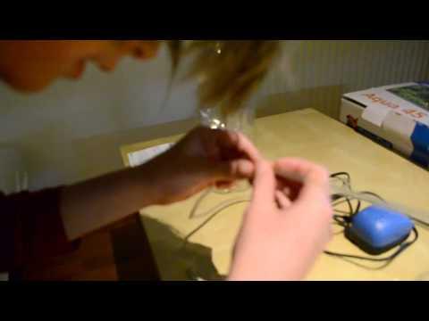 DIY How to Hatch and Harvest Brine Shrimp