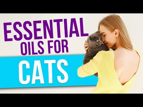 Essential Oils for Cats