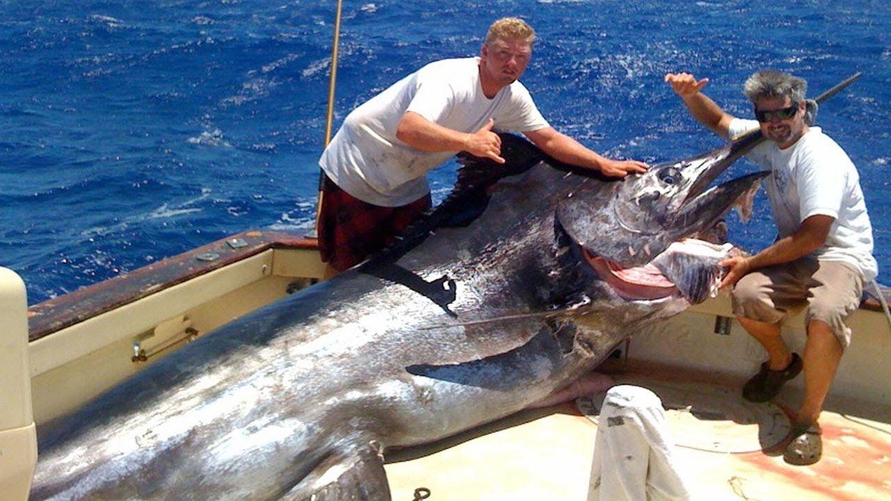 Amazing Fastest Giant Bluefin Tuna and Swordfish Fishing skill - Most Satisfying Sea Fishing Videos