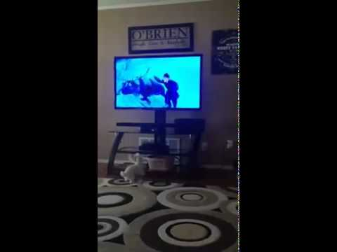Adorable puppy barks at character on TV