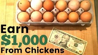 How To Make Money Raising Egg Laying Chickens