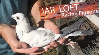 10 incredible things about homing pigeons