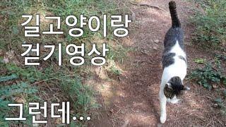 길고양이랑 걷기영상 그런데...-Walking with a stray cat, but...