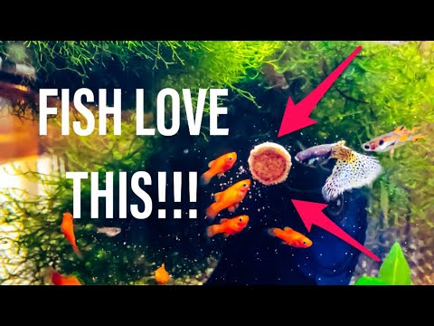 Trying Sera Fish Food!