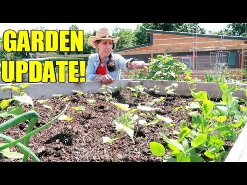 GARDEN UPDATE AND DOUG MISSPOKE =/