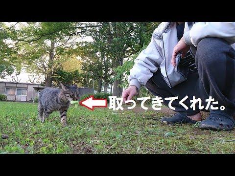 Stray cats are smart野良猫さんは、頭が良いですね