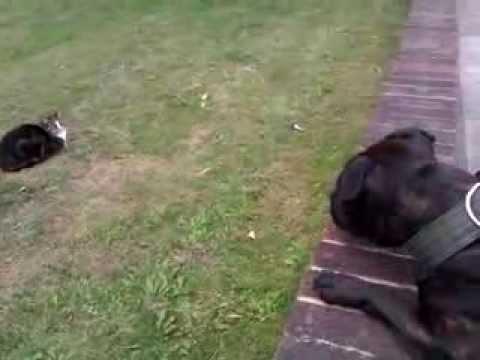 Murphy llora por un gato