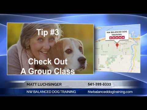 Northwest Premier Dog Trainer Matt Luchsinger with NW BALANCED DOG TRAINING Talks About How to ...