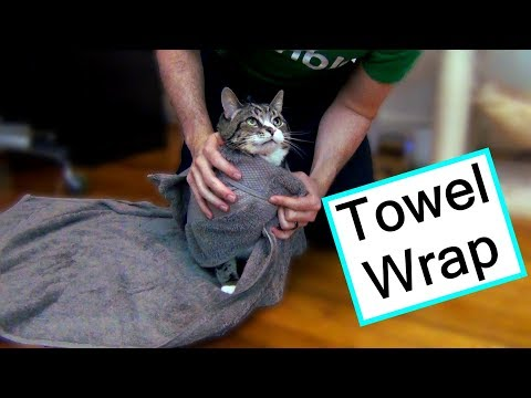 The Scratch-Free Way to Give Your Cat Medicine!