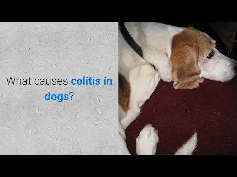 What causes colitis in dogs? 6 causes