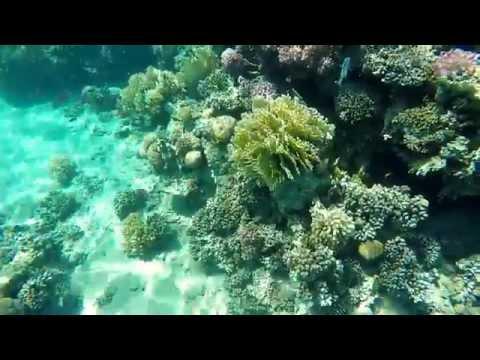 Prima Life Makadi Resort & SPA(coral reef)