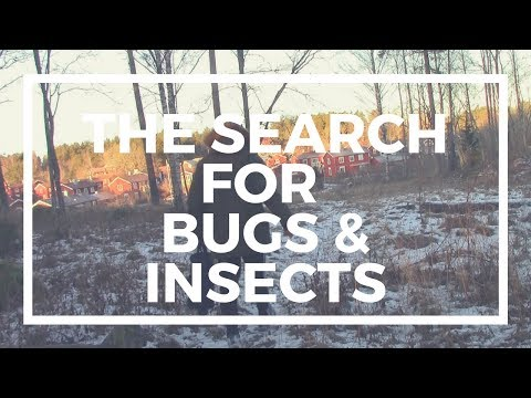 The Search For Bugs & Insects 2 | Winter Edition