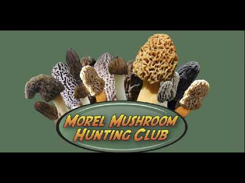 2018 Video Morel Mushroom Forecast and Finds for March, 2018