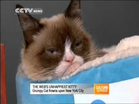Grumpy cat frowns upon NYC