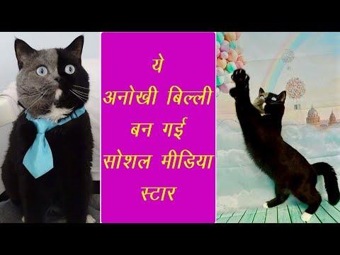 ये अनोखी बिल्ली सोशल मीडिया पर हो रही है वायरल, इसकी खासियत है सबसे जुदा