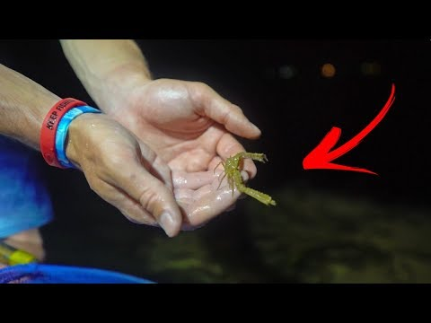 Tiny VENOMOUS Fish Found On The Beach!