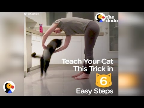 How To Teach Your Cat A Trick In 6 Easy Steps | The Dodo