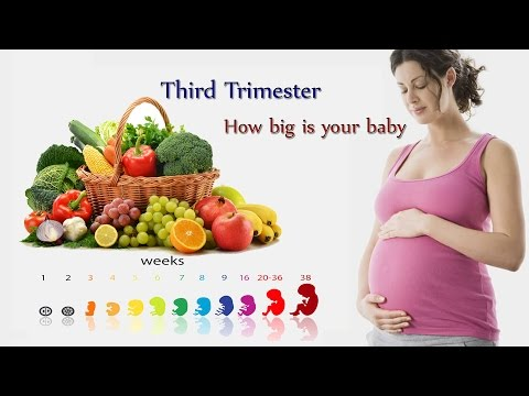 How big is your baby week by week fruit comparison -Third Trimester