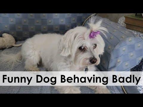 FUNNY DOG BEHAVING BADLY!