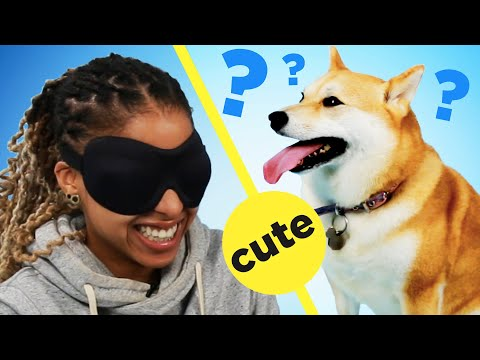 People Guess The Breed Of Dogs By Petting Them