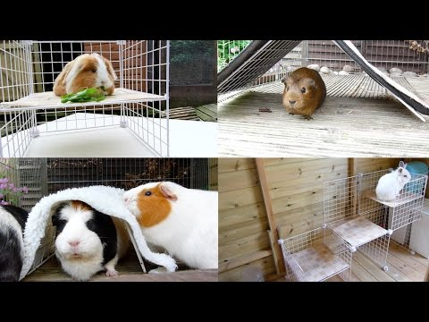 DIY: C&C Toys/Hides For Guinea Pigs And Rabbits