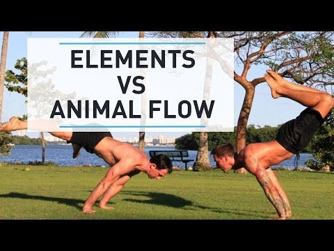 GMB Elements vs. Animal Flow - How do they compare?