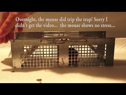 Humane Mouse Trap, most sensitive live catch trigger I could find... it works