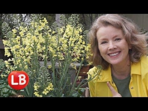 Growing Savoy Cabbage Part 1   Late Bloomer   Episode 5