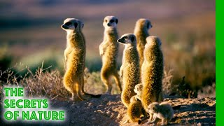 Namaqualand - Africa