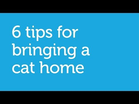 6 Tips for Bringing a New Cat Home (Petco)